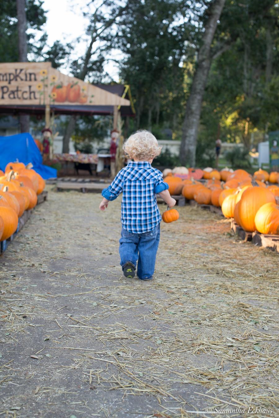Pumpkin Patch Family Portraits